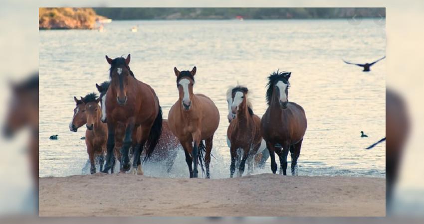 Ελεύθερα άλογα