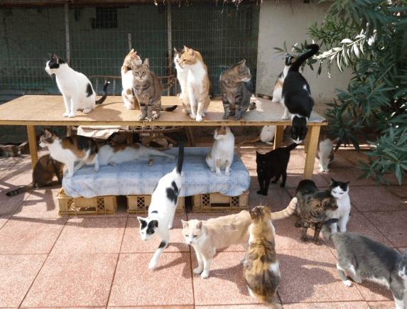 Οι γάτες της Προστασίας Αδέσποτων Ζώων η Αγάπη