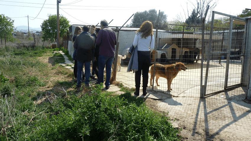 Ελάτε σε επαφή και ρωτήστε την Προστασία Αδέσποτων Ζώων η Αγάπη πως μπορείτε να υιοθετήσετε αδέσποτα ζώα