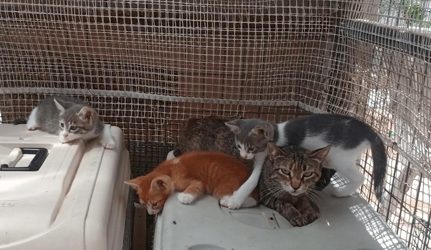 Προστατευμένες γάτες στο καταφύγιο της Προστασίας Αδέσποτων Ζώων η Αγάπη