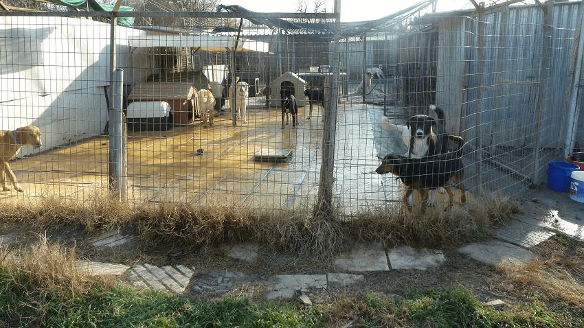 Προστατευμένοι σκύλοι στο καταφύγιο της Προστασίας Αδέσποτων Ζώων η Αγάπη