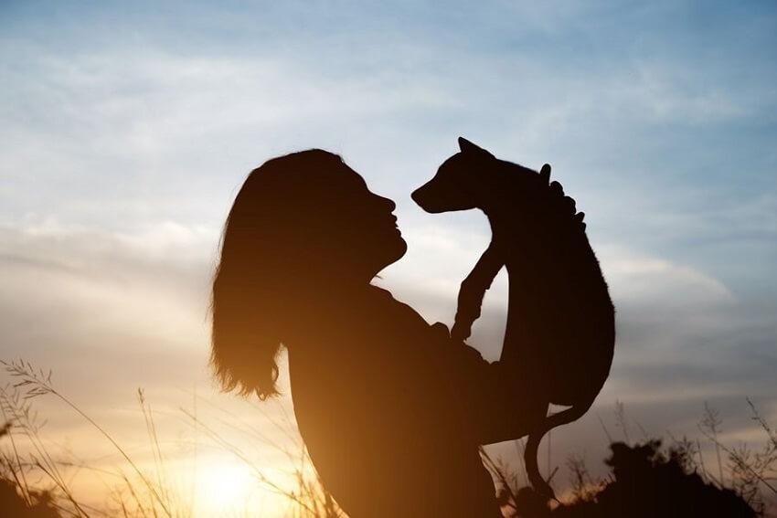 Όραμα η φροντίδα ζώων που βρίσκεται σε ανάγκη