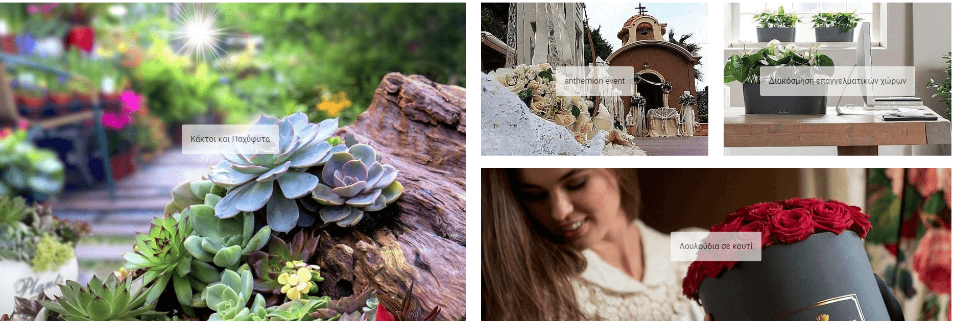 Στο anthemionflowers θα βρεις Κάκτους και Παχύφυτα, συνθέσεις για διακόσμηση Επαγγελματικών χώρων